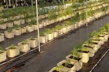 Growmor Farms